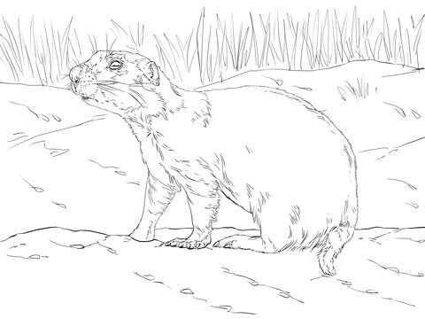 Realistic Prairie Dog coloring page