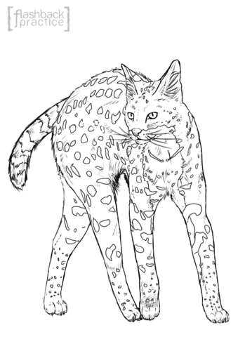 Realistic Serval coloring page