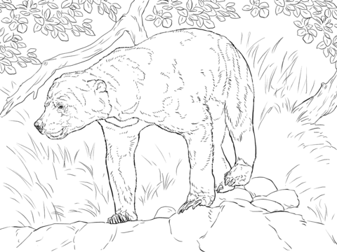 Realistic Sun Bear coloring page