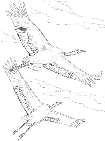 Red Crowned Cranes in Flight coloring page