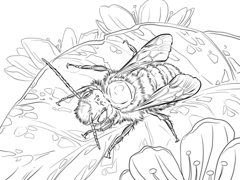 Red Mason Bee coloring page