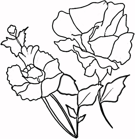 Red Poppies coloring page