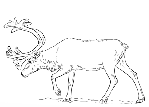 Swedish Reindeer coloring page
