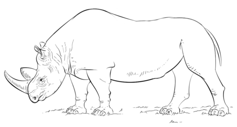 African rhino coloring page