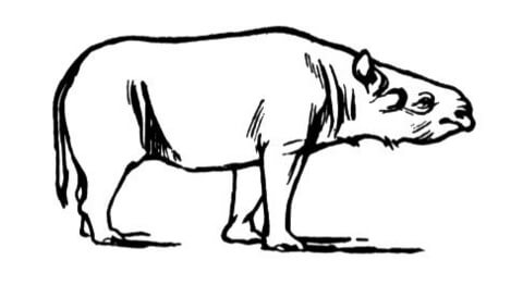 Acerathere Extinct Rhinoceros coloring page