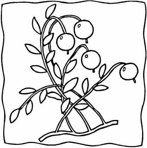 Ripe Cranberries  coloring page