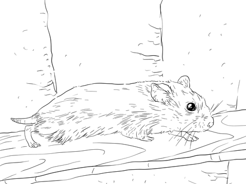 Roborovski Dwarf Hamster coloring page - Free Printable Coloring Pages
