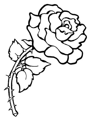 Colouring Pages Kookaburra : Beautiful big rose coloring page free printable coloring pages