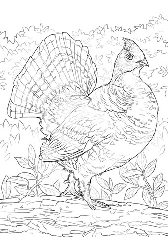 Ruffed Grouse coloring page