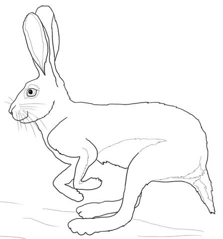 Running Desert Hare coloring page
