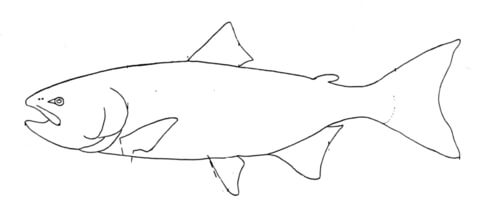 Salmon 4 coloring page