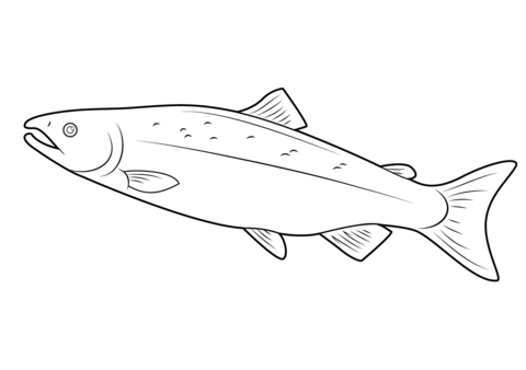 Salmon coloring page