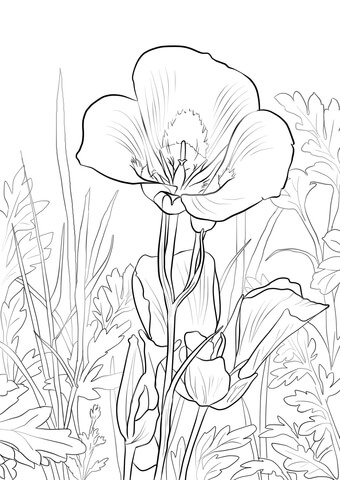 Sego Lily coloring page