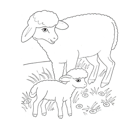 Sheep Mother And Lamb coloring page