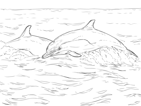 Short Beaked Common Dolphin coloring page