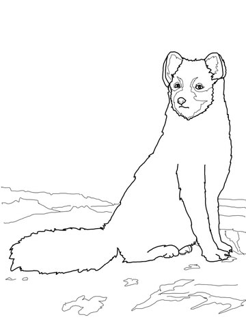 Sitting Arctic Fox coloring page