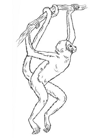 tamarin monkey coloring page spider monkey hanging from tree coloring page