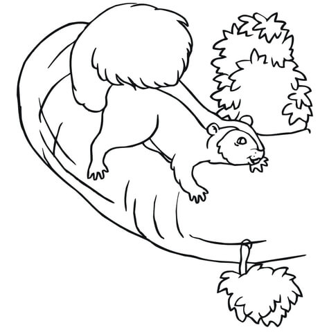Squirrel on a Tree coloring page
