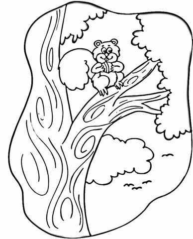 Squirrel on the Tree  coloring page