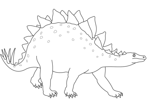 Young Stegosaurus coloring page