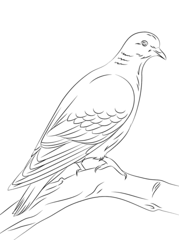 Stock Dove coloring page - Free Printable Coloring Pages