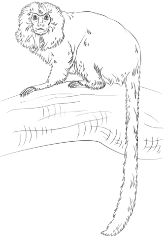Common marmoset coloring page free printable coloring pages Swinging Monkey Coloring Page Pig Coloring Pages Macaw Coloring Pages