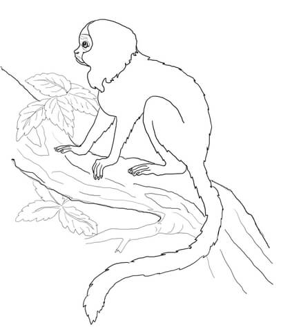 Tamarin Monkey Coloring Page