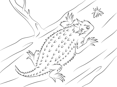 Texas Horned Lizard coloring page