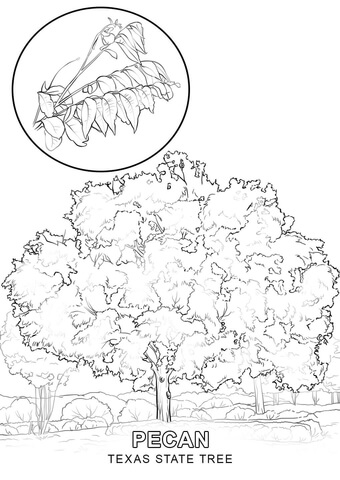 Texas State Map coloring page - Free Printable Coloring Pages