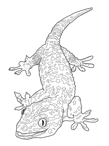 Tokay Gecko coloring page