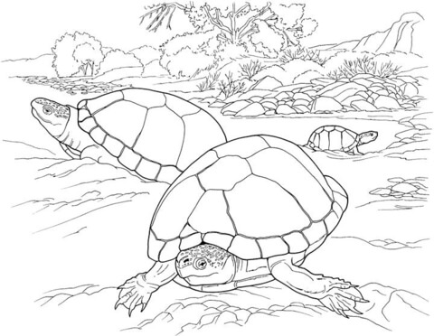 Turtles In The Desert coloring page