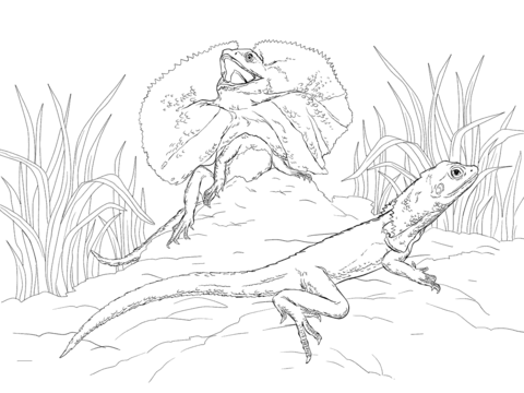 Two Frill Necked Lizards coloring page