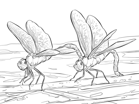 Two Green Darner Dragonflies coloring page