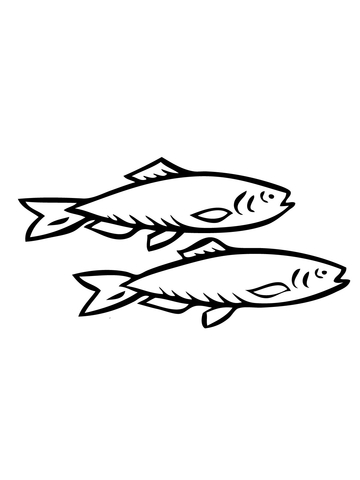 Two Herring Fishes coloring page