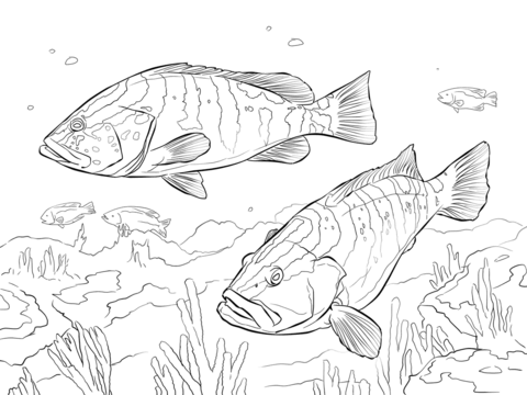 Two Nassau Groupers coloring page