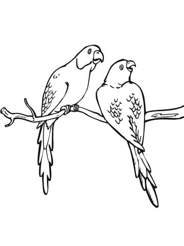 Two Parakeets coloring page - Free Printable Coloring Pages