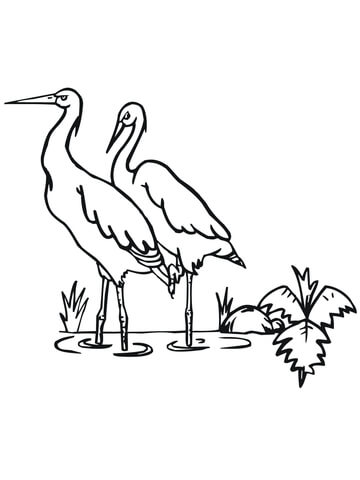 Stork coloring page - Free Printable Coloring Pages