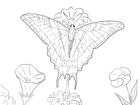 Two Tailed Swallowtail Butterfly coloring page