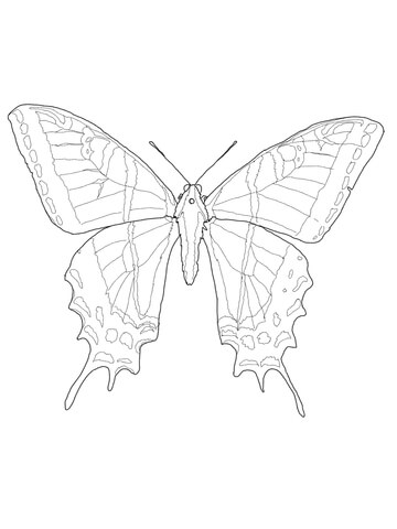 Two Tailed Swallowtail coloring page