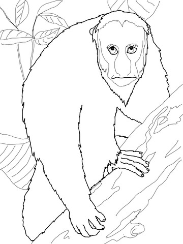 Uakari coloring page