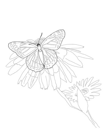 Viceroy Butterfly coloring page