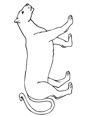 Attacking Mountain Lion Coloring Page Free Printable Coloring Pages