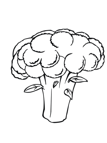 White Cauliflower coloring page