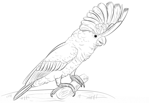 White Cockatoo coloring page