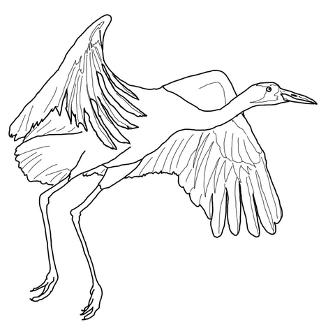 Whooping Crane Fly coloring page