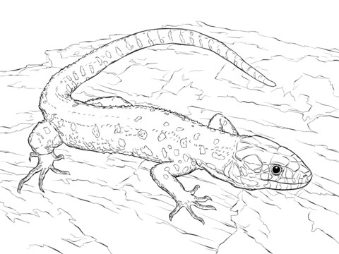 Yellow Spotted Tropical Night Lizard coloring page