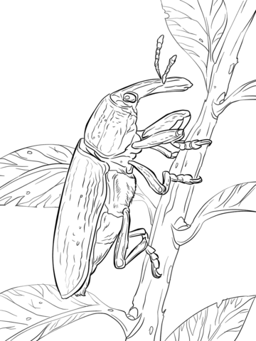 Yellow Weevil coloring page