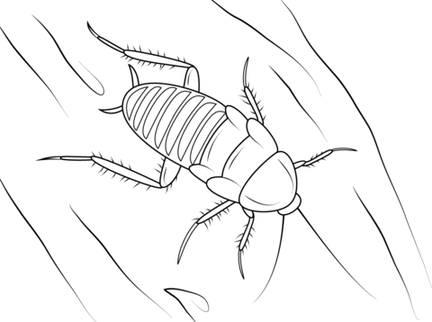 Zebra Cockroach coloring page